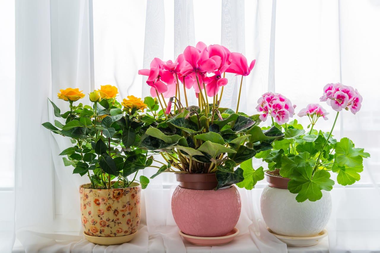 風水コラム バラ色の人生 花 カラー 色 ドライフラワー 造花